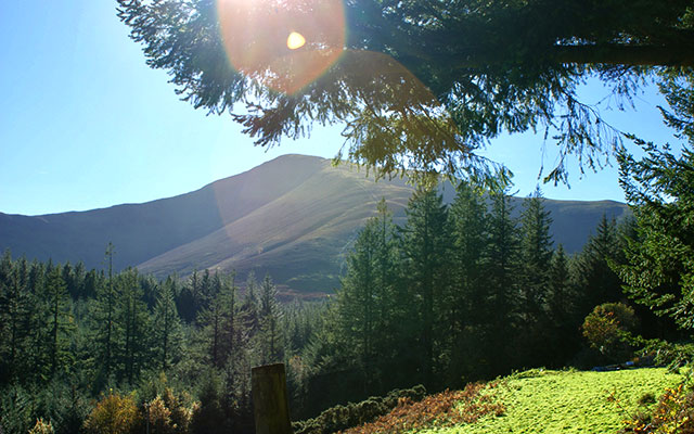 Views at Whinlatter Forest