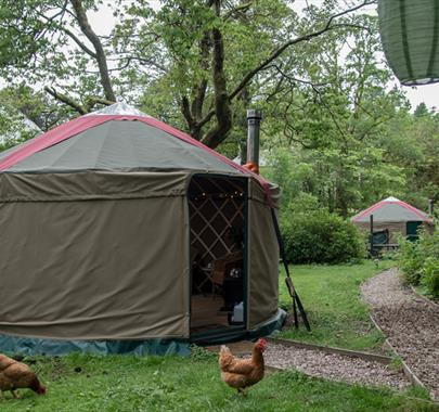 Glamping yurts at The Black Swan