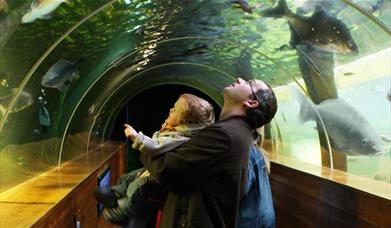 Lakes Aquarium underwater tunnel